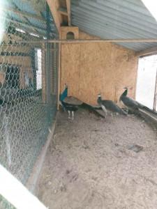 Екзотичні птахи